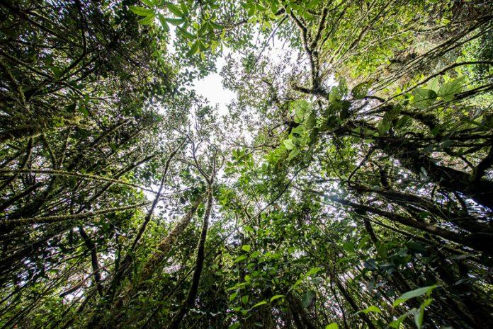 Los bosques son un potente agente contra el cambio climático